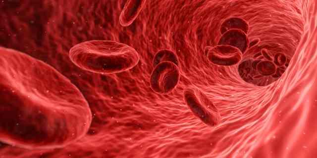 Mikroben im Blut – unbekannte Bewohner in uns